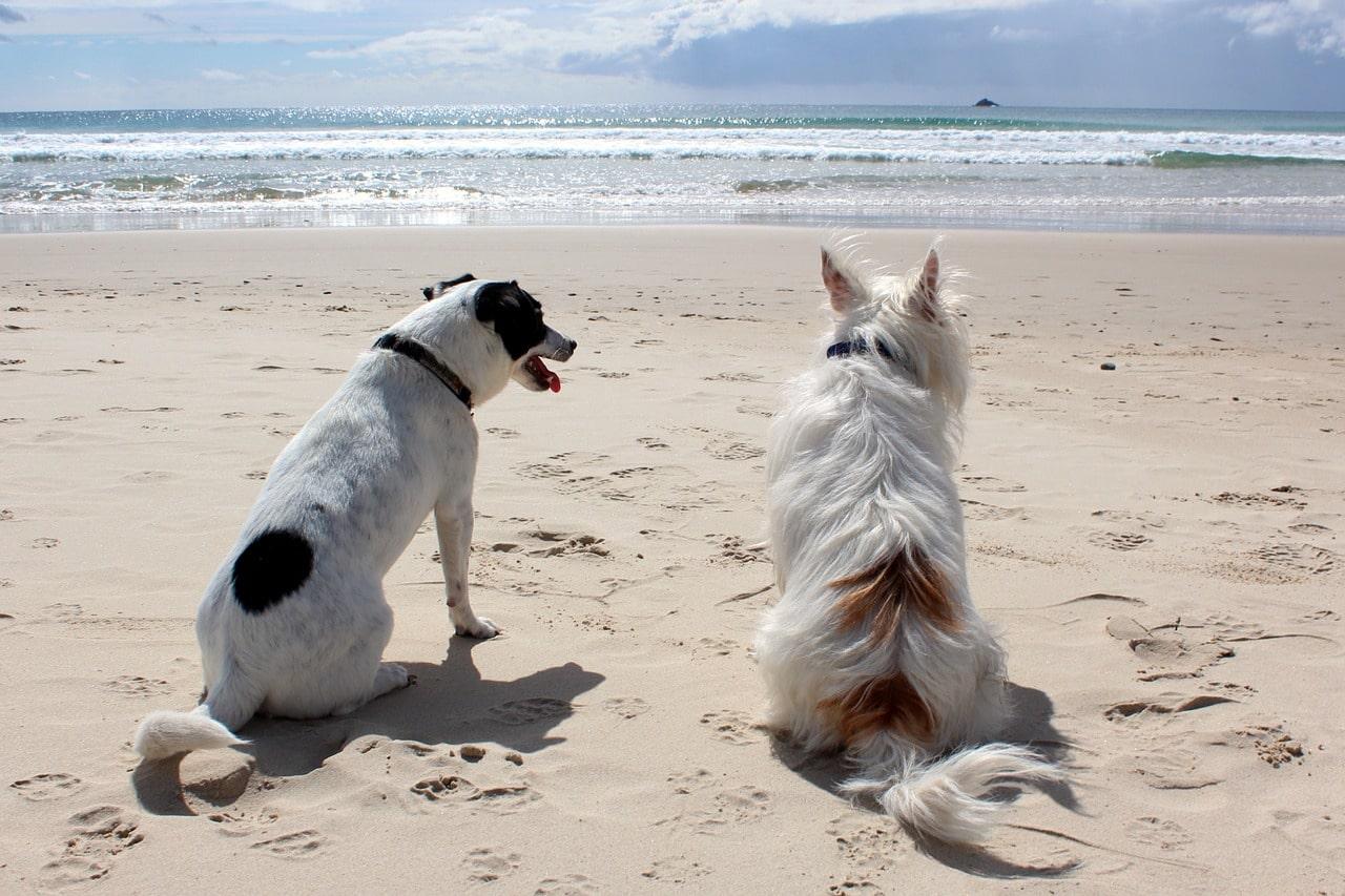 vakantiepark met hond aan zee